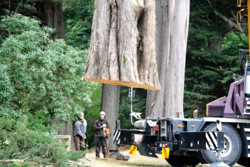 werken met bomen