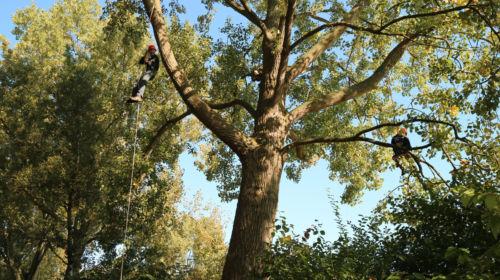 boomklimmen amsterdam
