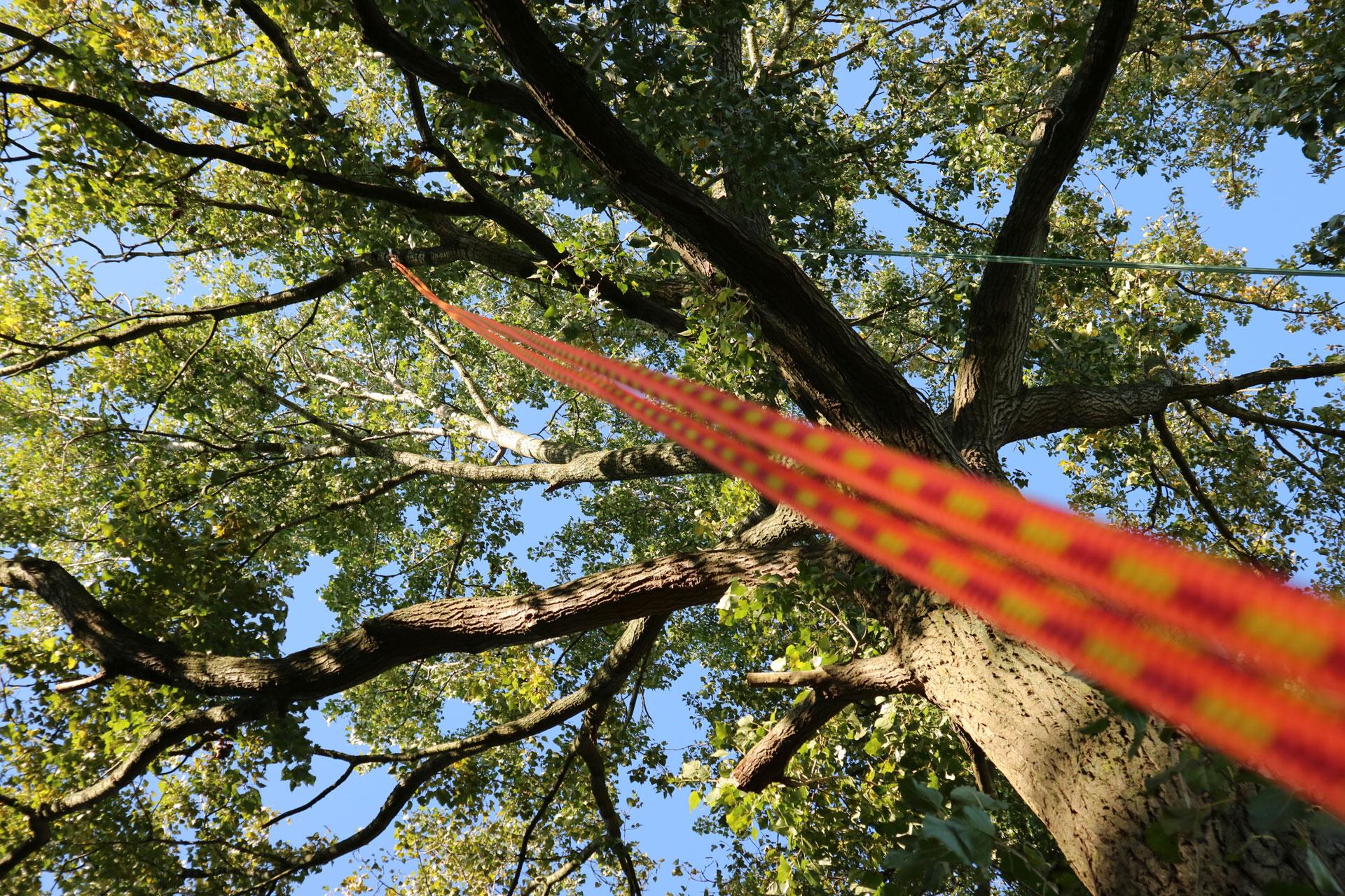 boomklimmen ouderen
