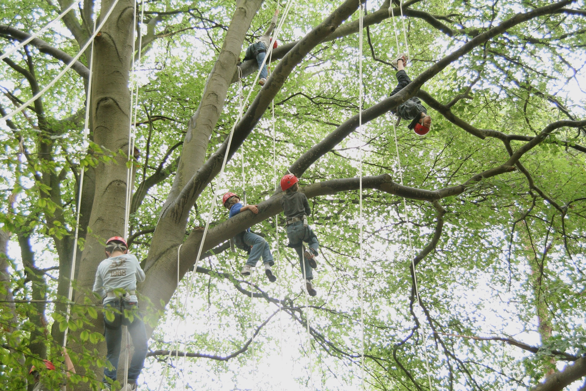 boomklimmen scholen