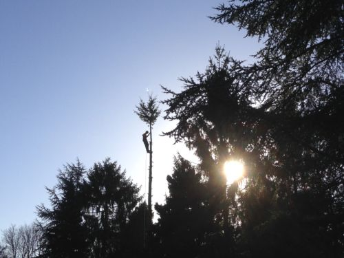 op sporen boom afbreken