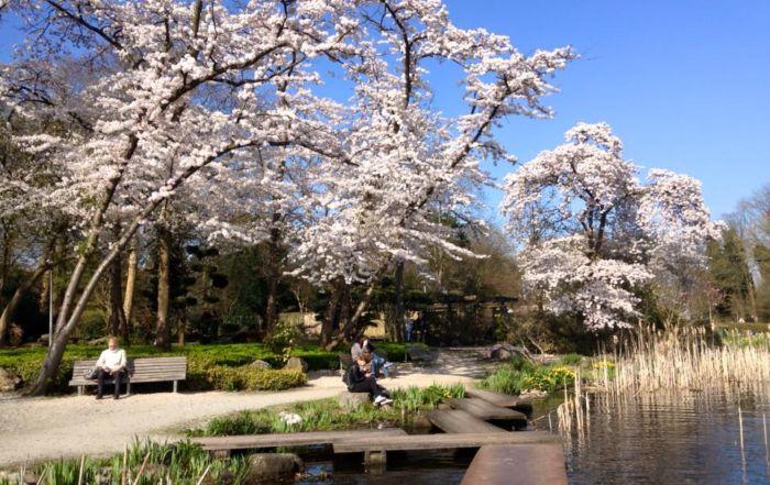 Leer bij ons professioneel boomklimmen! amstelpark